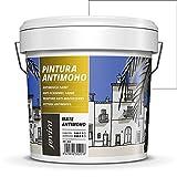 PINTURA ANTIMOHO, evita el moho, resistente a la aparición de moho en paredes, aspecto...