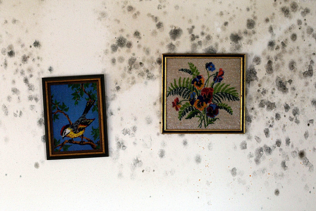 eliminar moho en las paredes