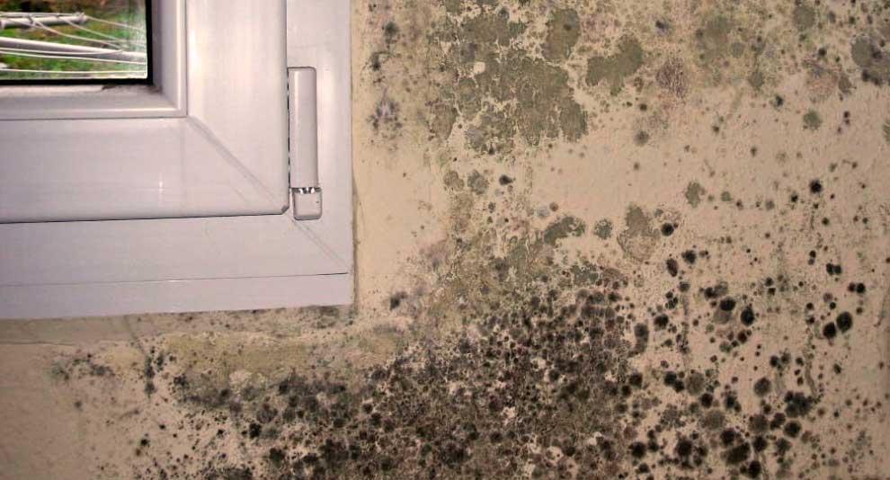 como terminar com mofo na parede