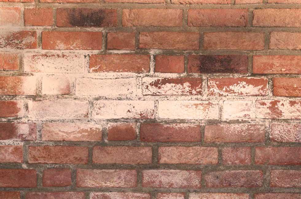 salitre en paredes de ladrillo visto